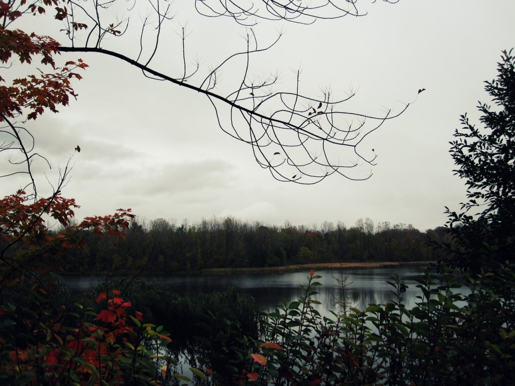 A view of McKay Lake from Lansdowne Road North